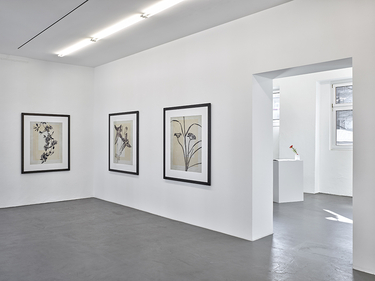 Installation view - Thomas Ruff
