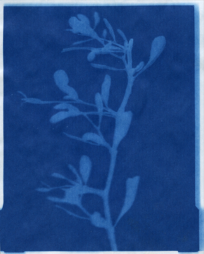Solar Copy / Shadows of Plants No. 019